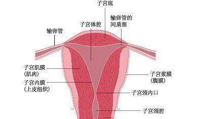 宣威女性子宫内膜增厚异常的原因