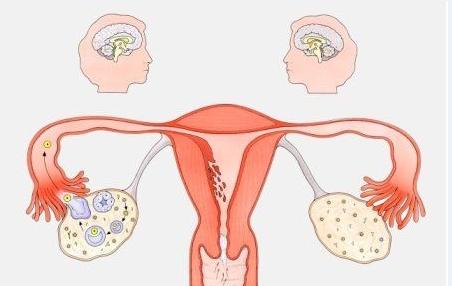 兴义妇女月经失调性不孕是由什么原因引起的
